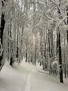 Lucus Angitiae - bosco in inverno