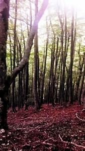 Lucus Angitiae - il bosco sacro