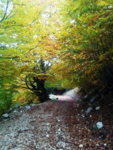 """"""" due strade divergevano in un bosco ed io... """""""