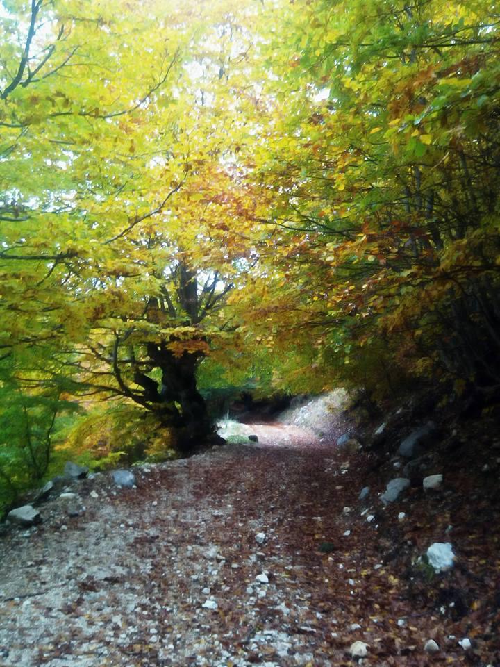 """""""due strade divergevano in un bosco ed io… """" LA VITA E IL BOSCO secondo ROBERT FROST"""