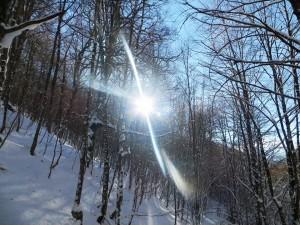 Faggeta di Val Cervara