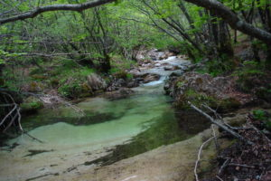 national_park_of_abruzzo_latium_and_molise_02196