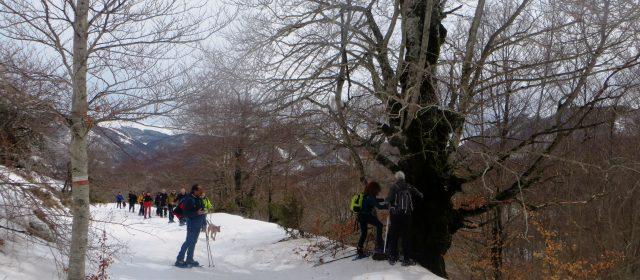 Ciaspolata nel Parco Nazionale d'Abruzzo, Lazio e Molise