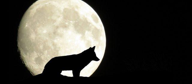 """Escursione Astronomica: """"In viaggio verso Sorella Luna"""""""