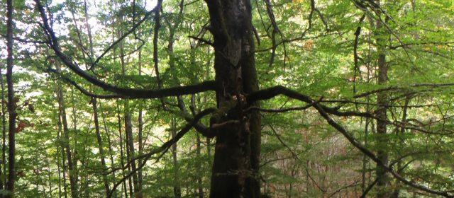 Escursione guidata nella foresta vetusta della Val Cervara [FOTO]