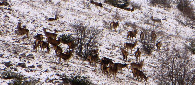 Tra cervi e grifoni alle pendici del Monte Velino [foto e video]