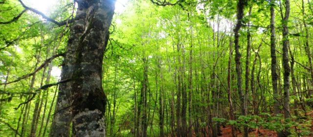 La faggeta di Val Cervara: la faggeta più antica d'Europa e patrimonio mondiale UNESCO