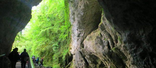 Tra boschi, fonti e grotte: Riserva Naturale Regionale Grotte di Luppa