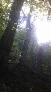 Faggeta di Val Cervara - sole tra i rami